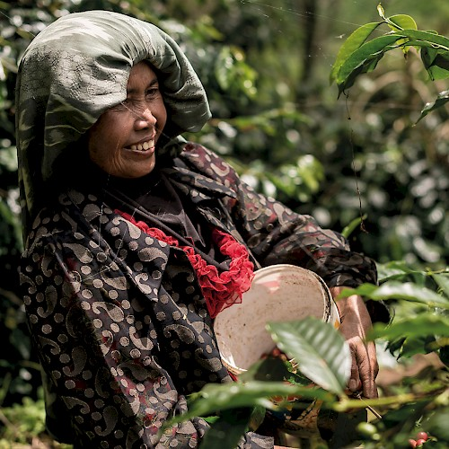 Oran Utan Coffee Project - Coffee picking